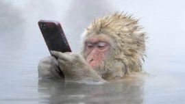 """猴哥热衷玩自拍,人类的""""自拍病""""是否在向动物界蔓延?"""