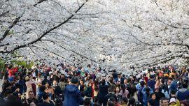 清明小长假国内旅游收入超271亿,旅游业开始强势回暖!