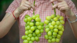 从牛油果,车厘子到阳光玫瑰,为何网红水果一个个跌落神坛?